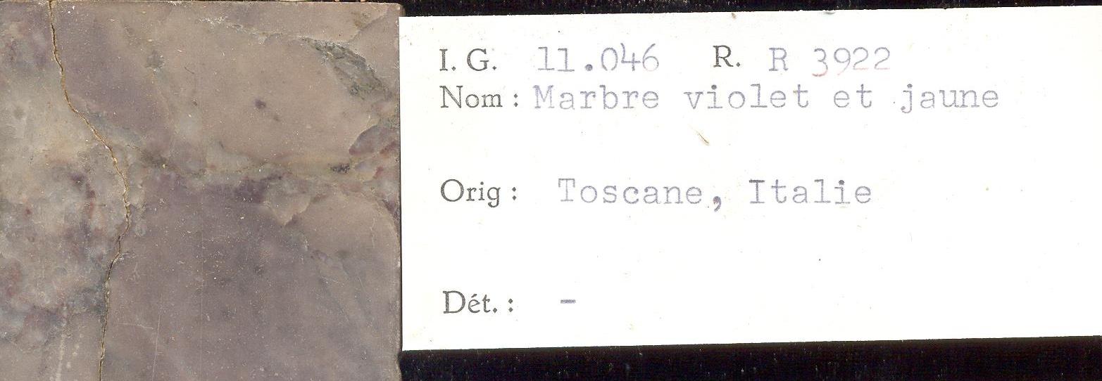 Toscane Violet et Jaune RR3922.