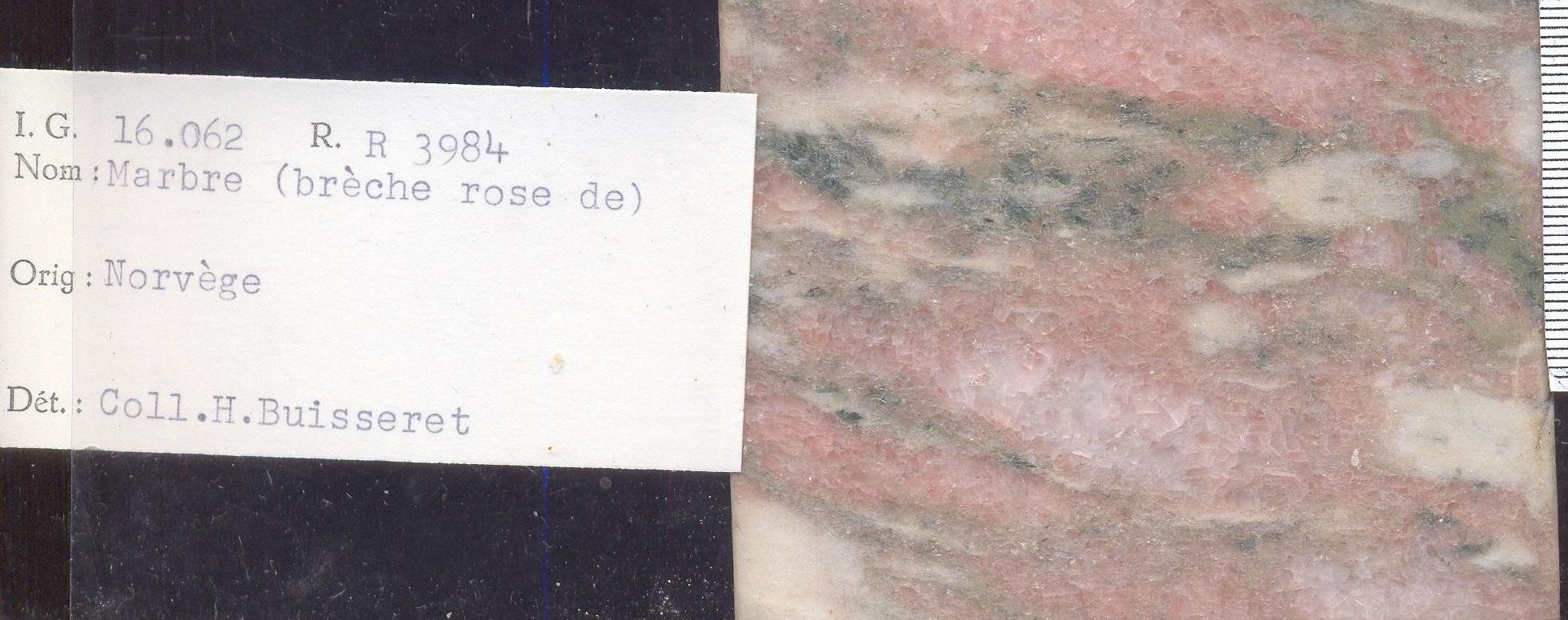 Rose de Norvege RR3984