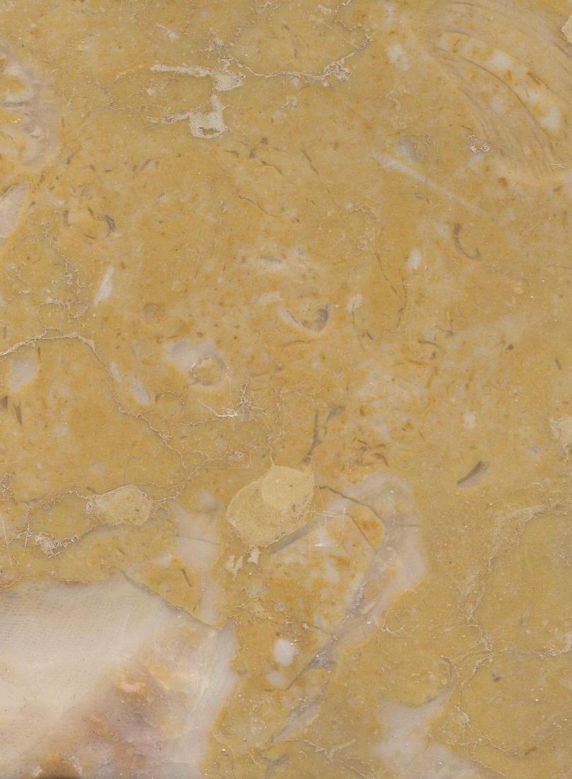 Amarelo Negrais M1066