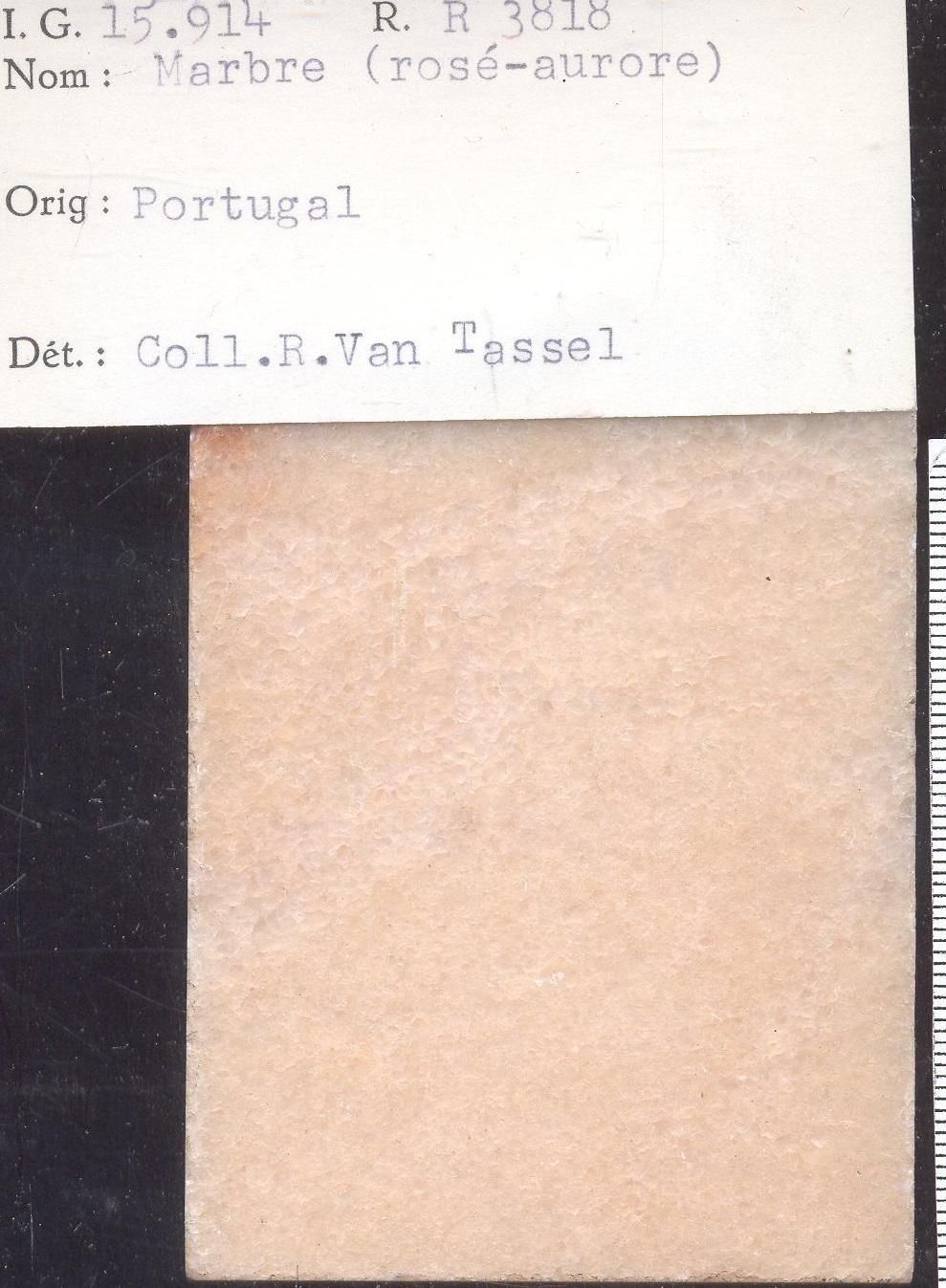 Rosé-aurore RR3818
