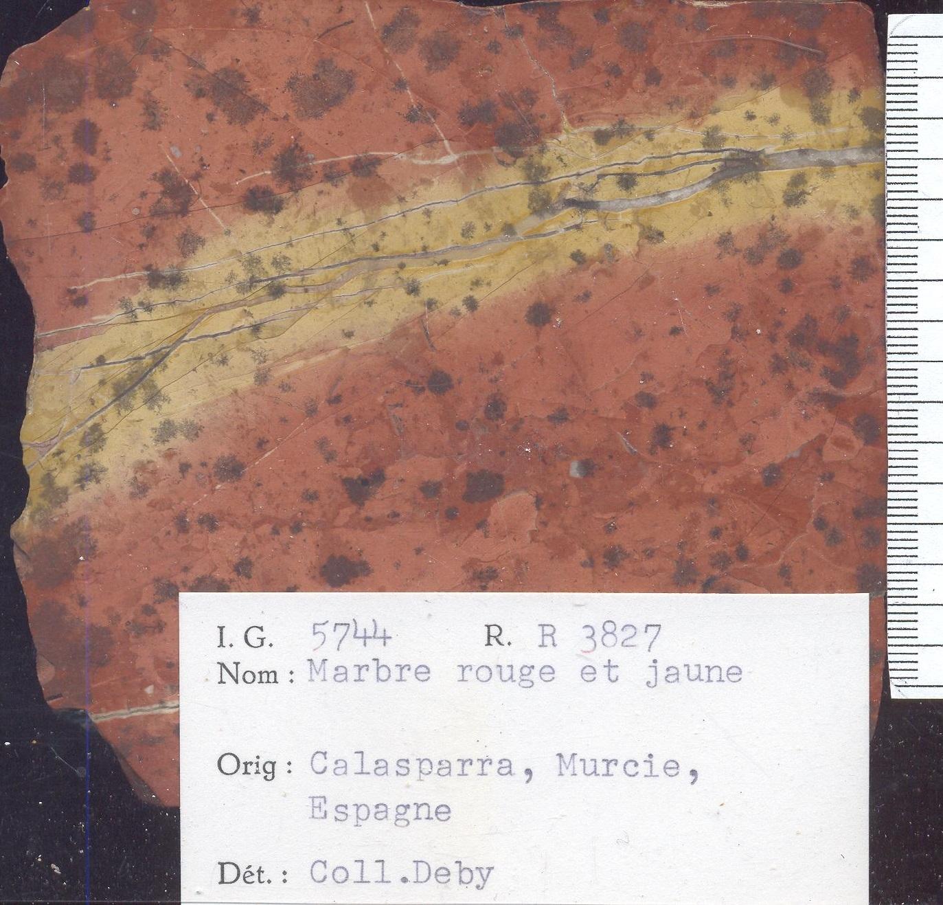 Calasparra rouge et jaune RR3827