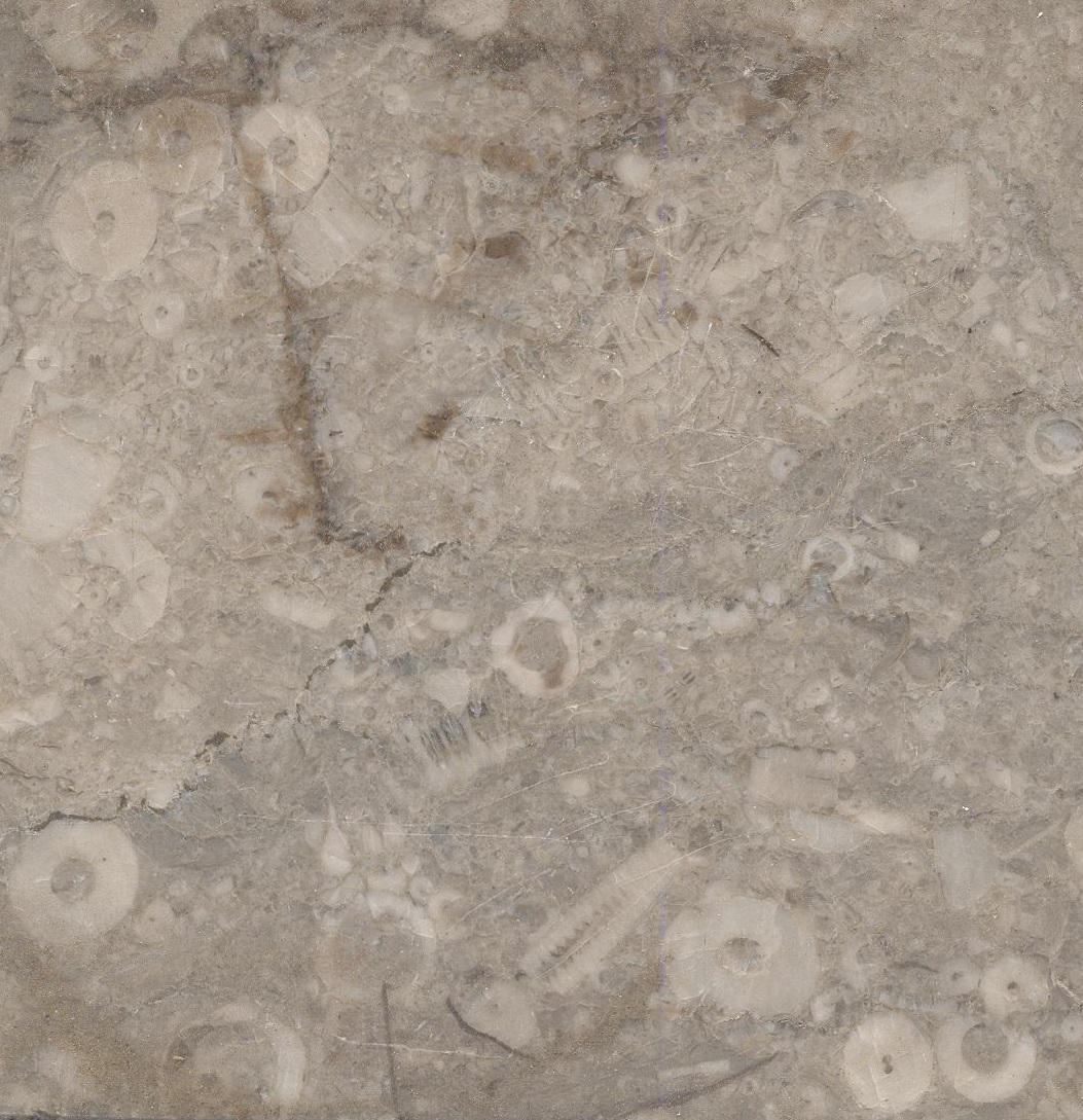 Hadene N°3A Fossil M553