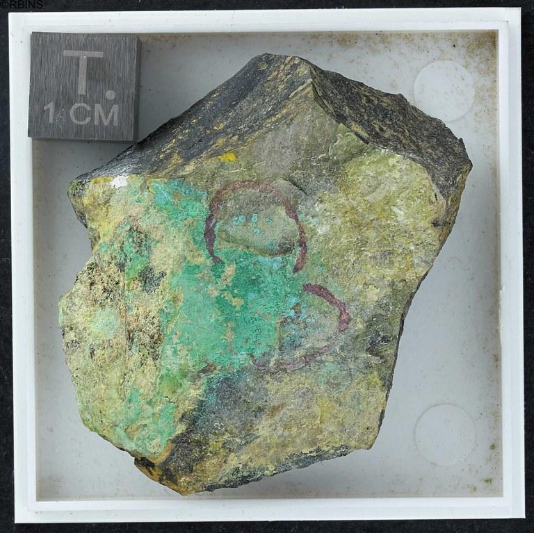 rc3513-holotype-zs-pmax_dxo_lowq.jpg