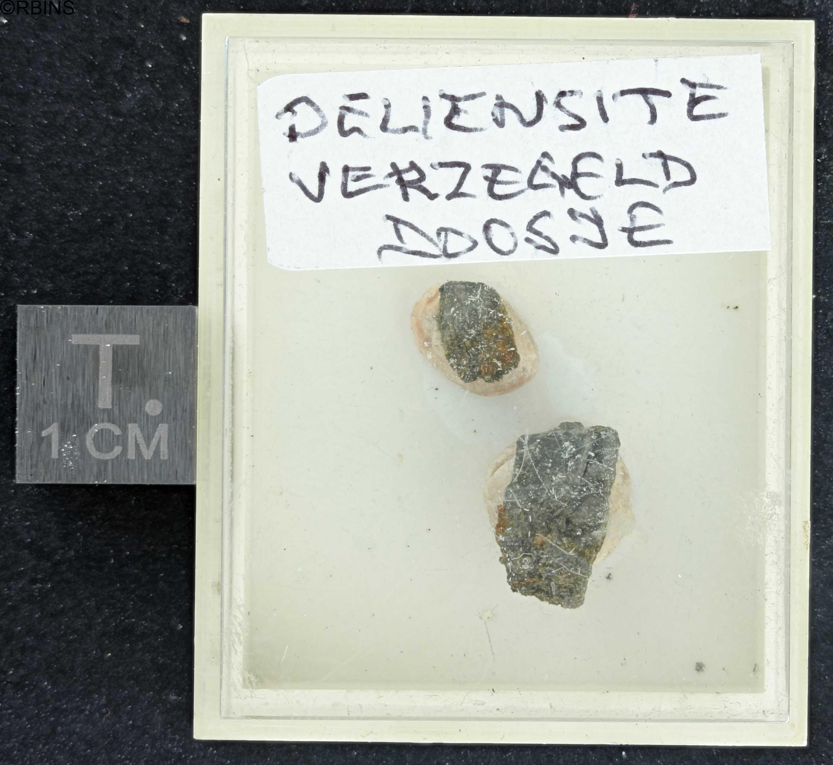 rc4718-holotype-zs-pmax_dxo_lowq.jpg