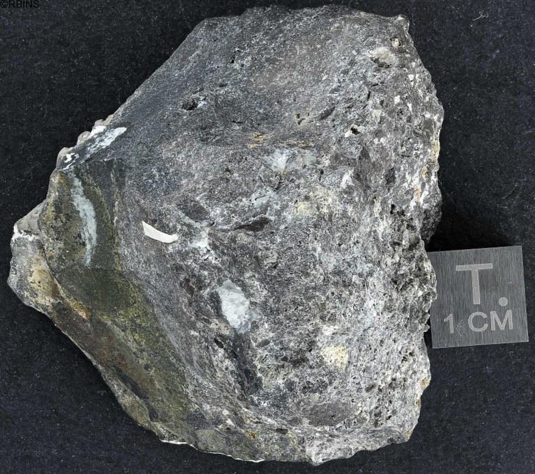 rn5210-holotype-zs-pmax_dxo_lowq.jpg