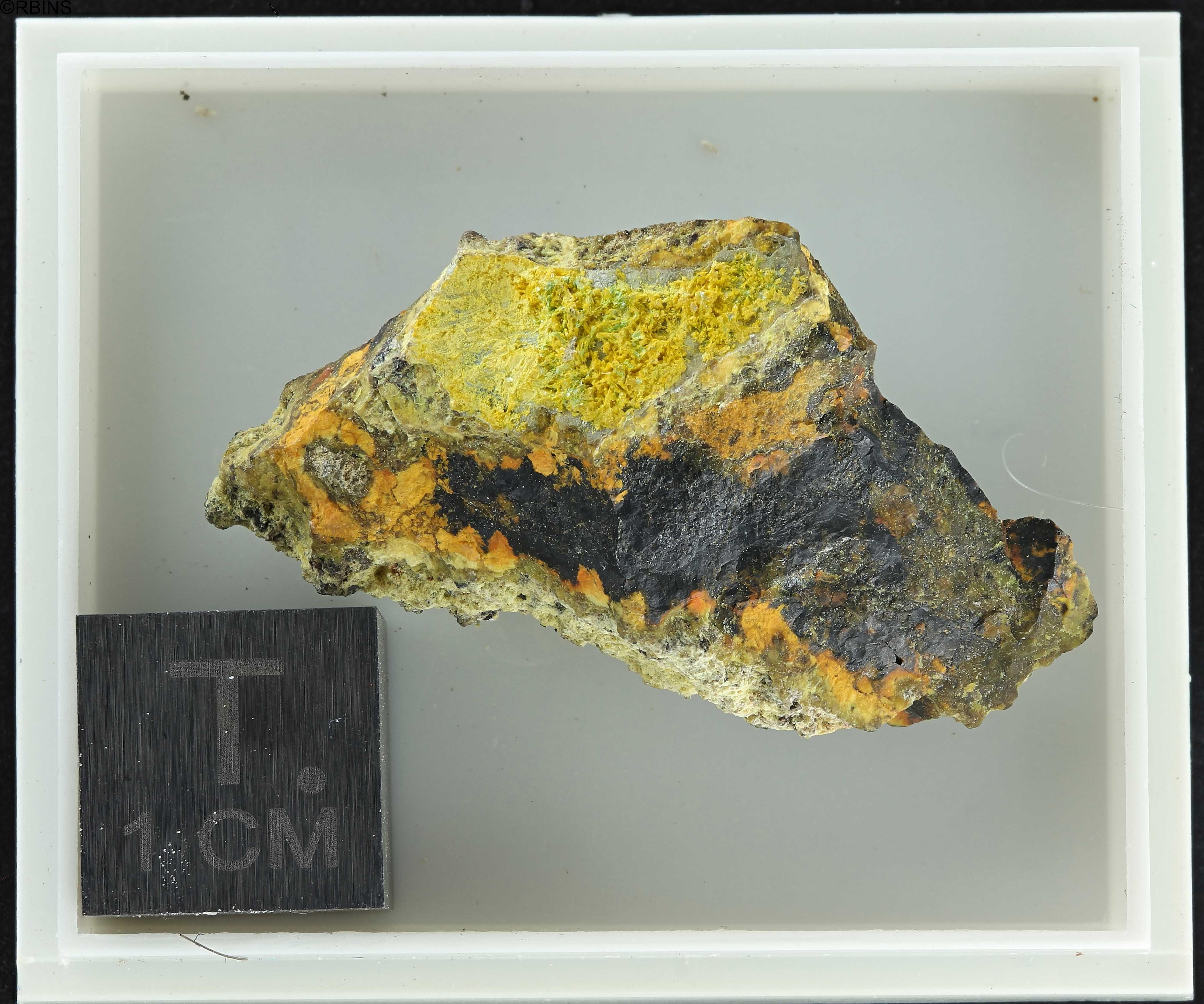 rc3512-holotype-zs-pmax_dxo_lowq.jpg