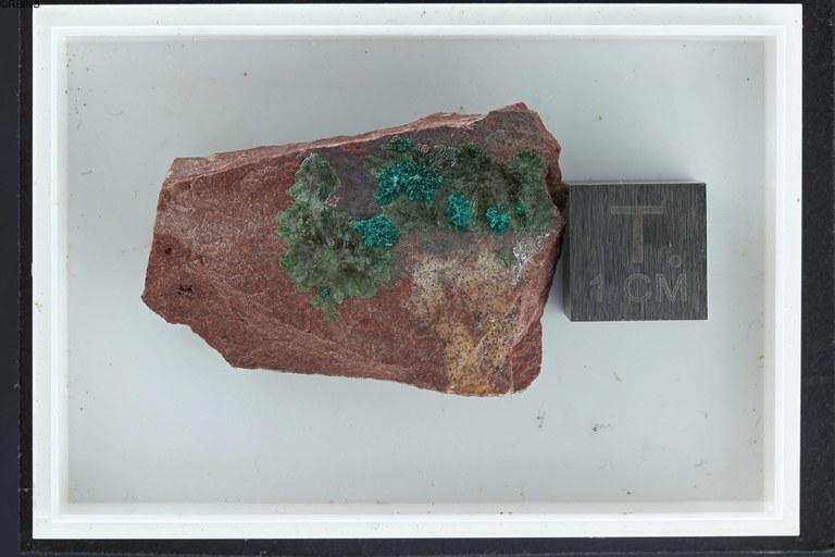 rc3514-holotype-zs-pmax_dxo_lowq.jpg
