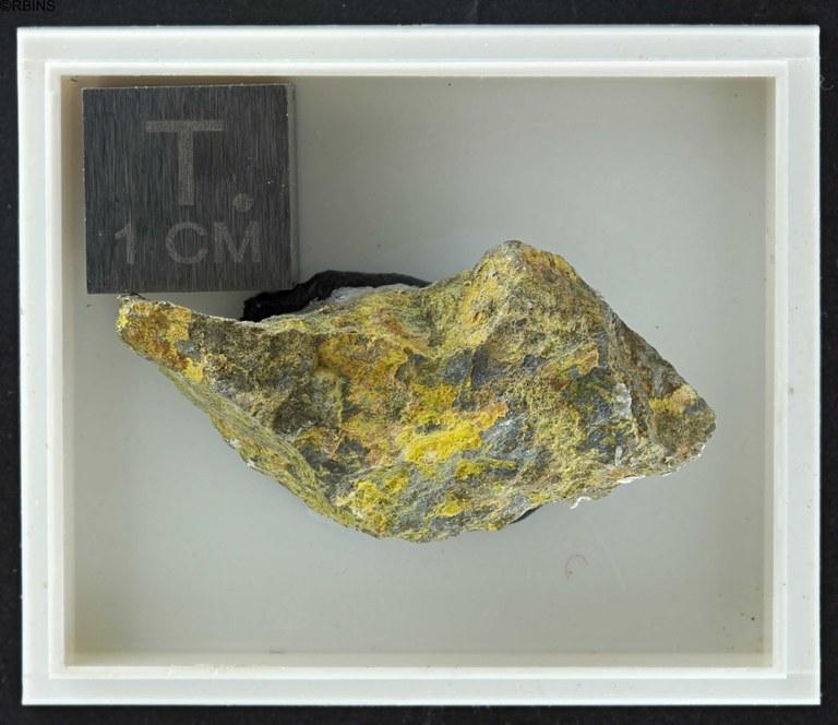 rc4409-holotype-zs-pmax_dxo_lowq.jpg