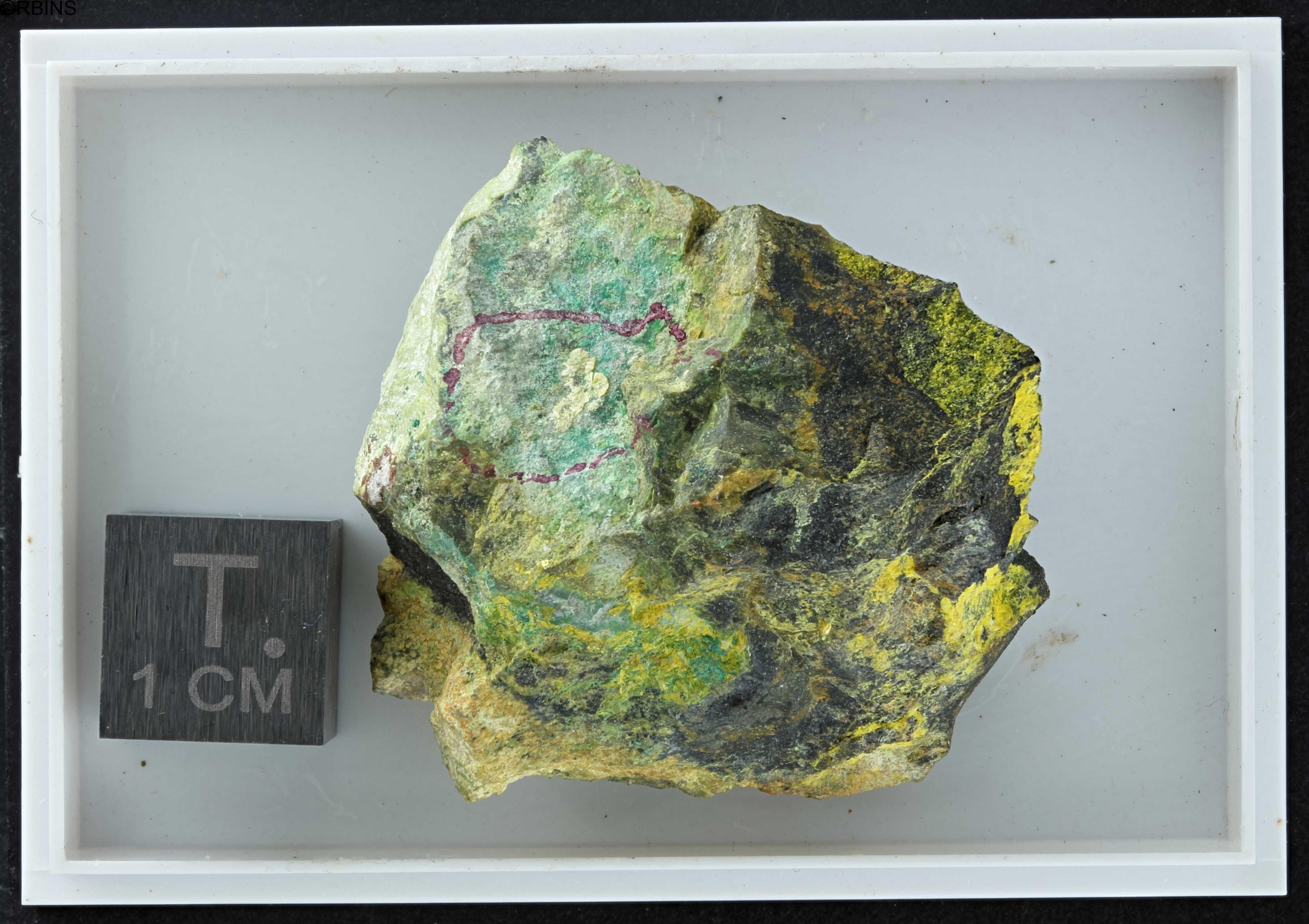 rc3511-holotype-zs-pmax_dxo_lowq.jpg