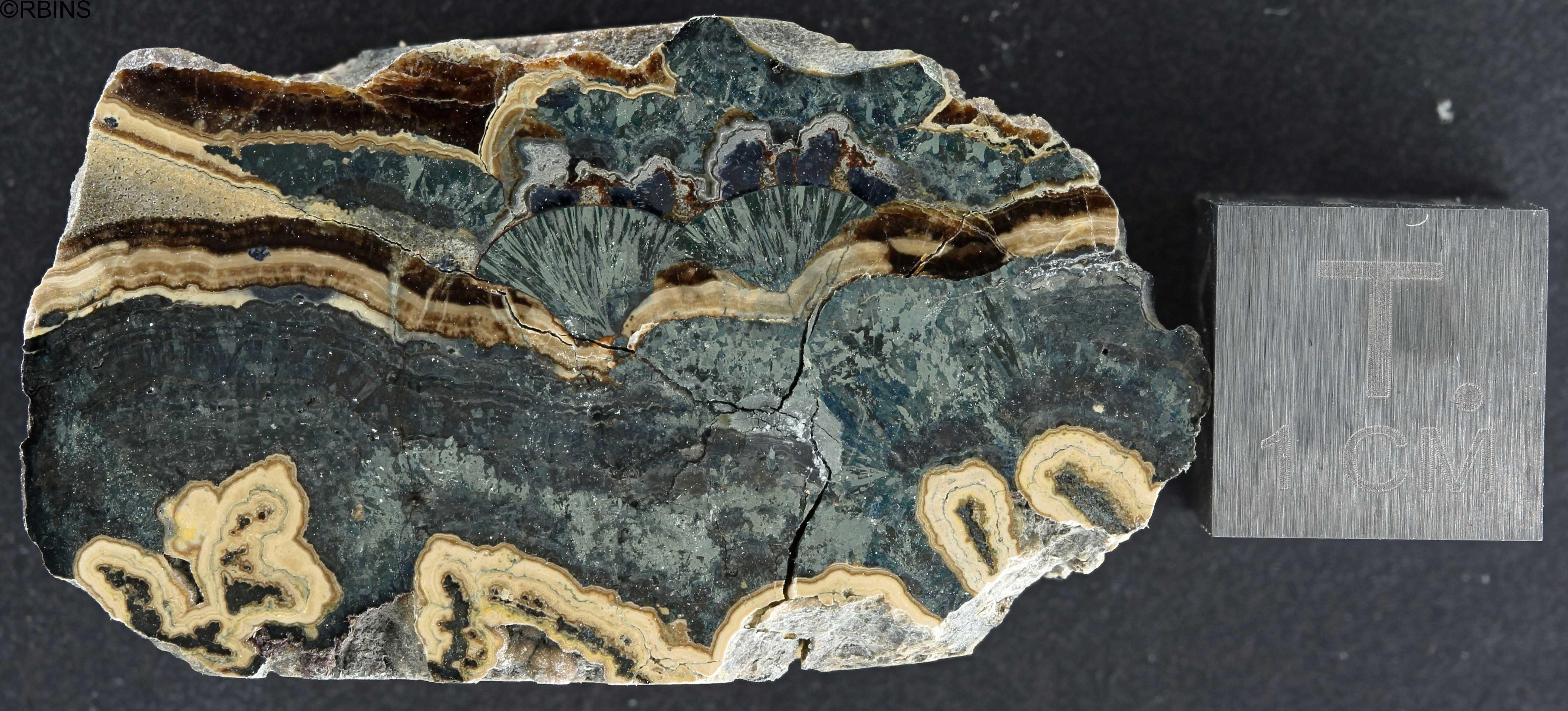 rn6380-holotype-zs-pmax_dxo_lowq.jpg