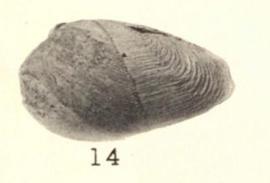 Pl. I, fig. 14