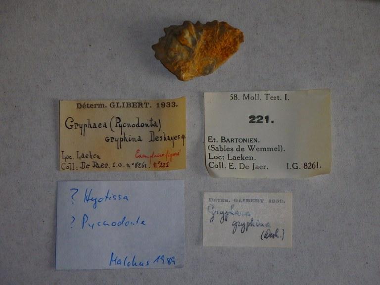 Specimen + labels