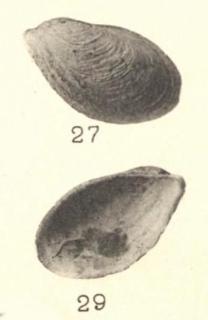 Pl. I, fig. 27-29