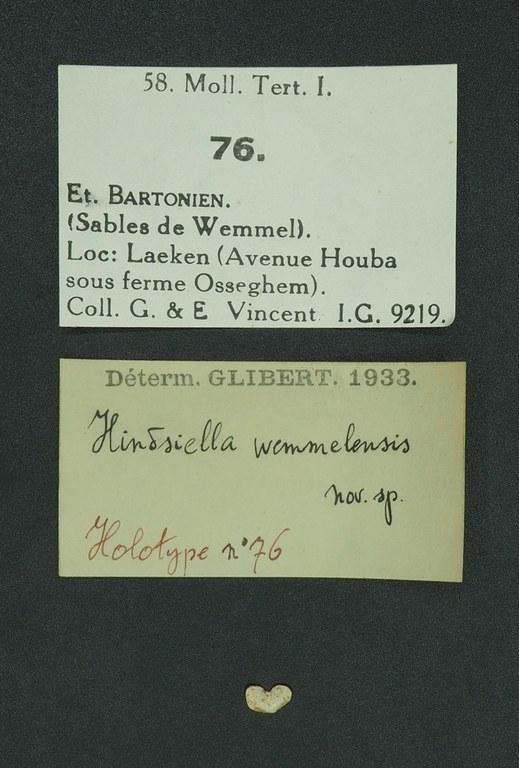 RBINS 76 - Hindsiella wemmelensis ht D