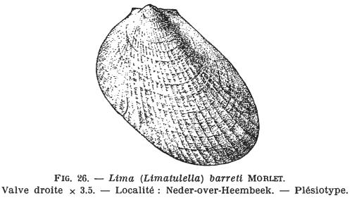 Fig.26 - Lima barreti