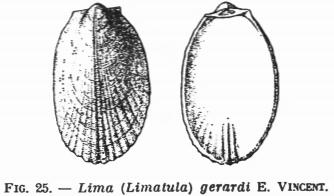 Fig 25 - Lima (Limatula) gerardi