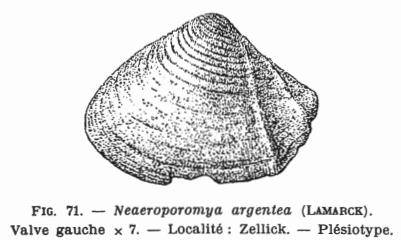 Fig.71 - Neacroporomya argentea