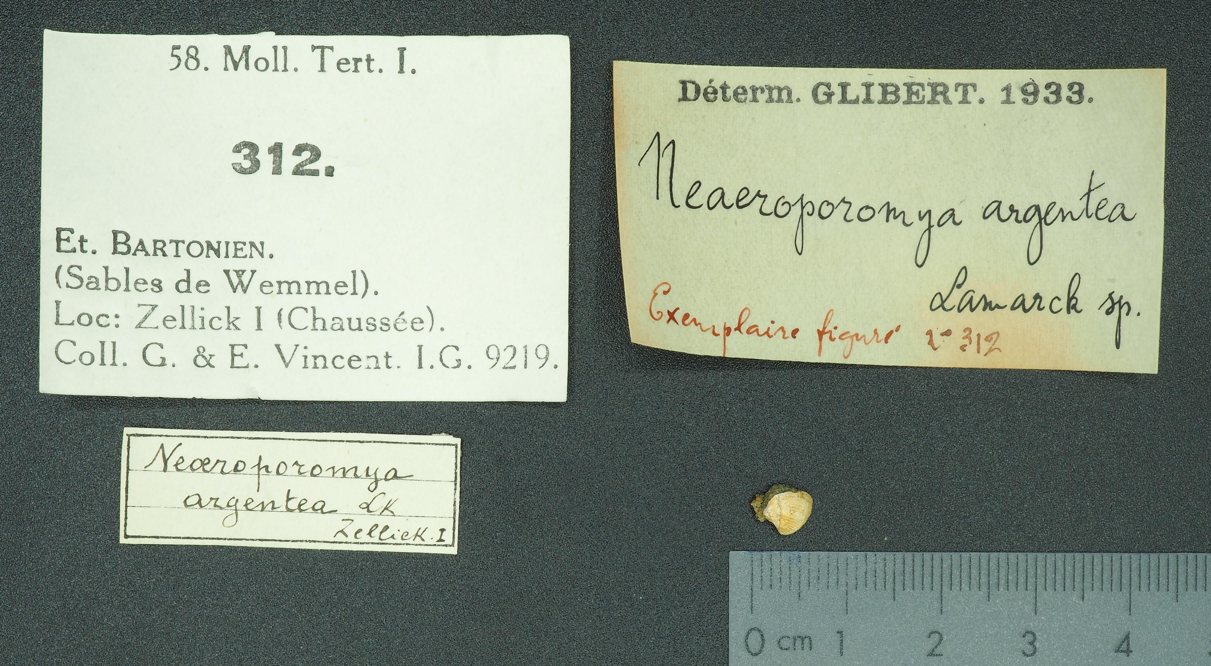 RBINS 312 - Neacroporomya argentea fig Lb
