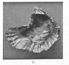 Pl. 2, fig. 4c