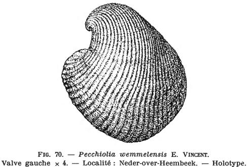 Fig. 70 - Pecchiolia wemmelensis