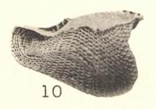 Pl. I, fig. 10