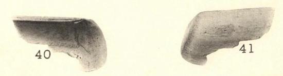 Pl. I, fig. 40-41