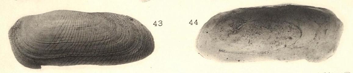 Pl. I, fig. 43-44