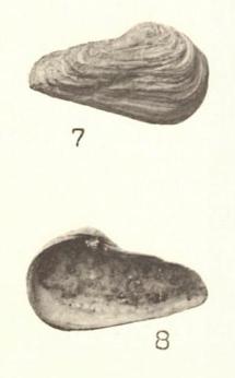Pl. II, fig. 7-8
