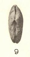 Pl. II, fig. 9