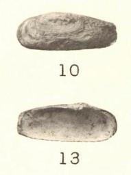 Pl. II, fig. 10-13