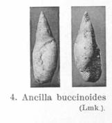 Pl. IV, fig. 4
