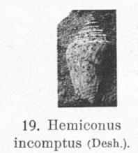 Pl. IV, fig. 19