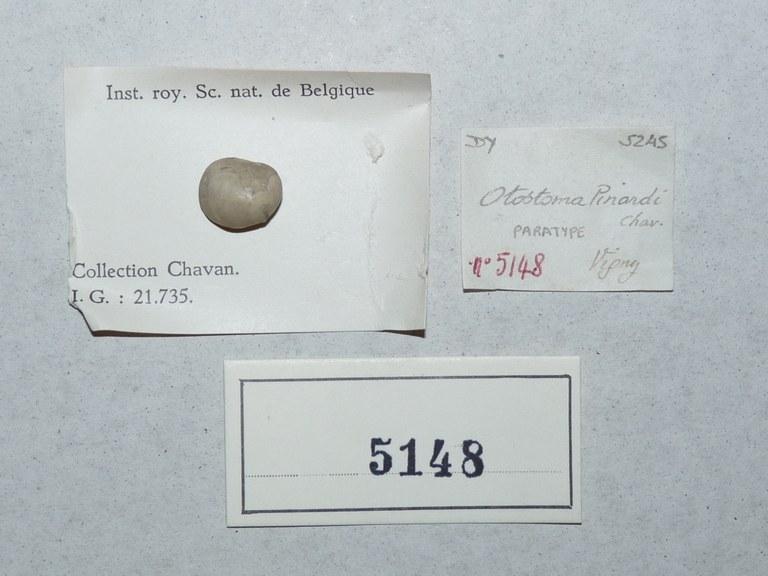 IRSNB 05148 (Otostoma pinardi) Labels