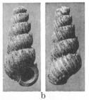 Fig.13b - Scala subcylindrica