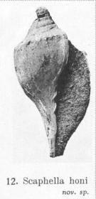 Pl. IV, fig. 12