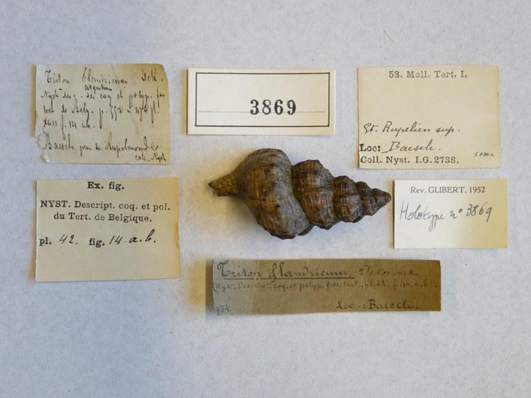 IRSNB 03869 (Triton flandricum) Label