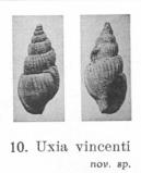 Pl. IV, fig. 10