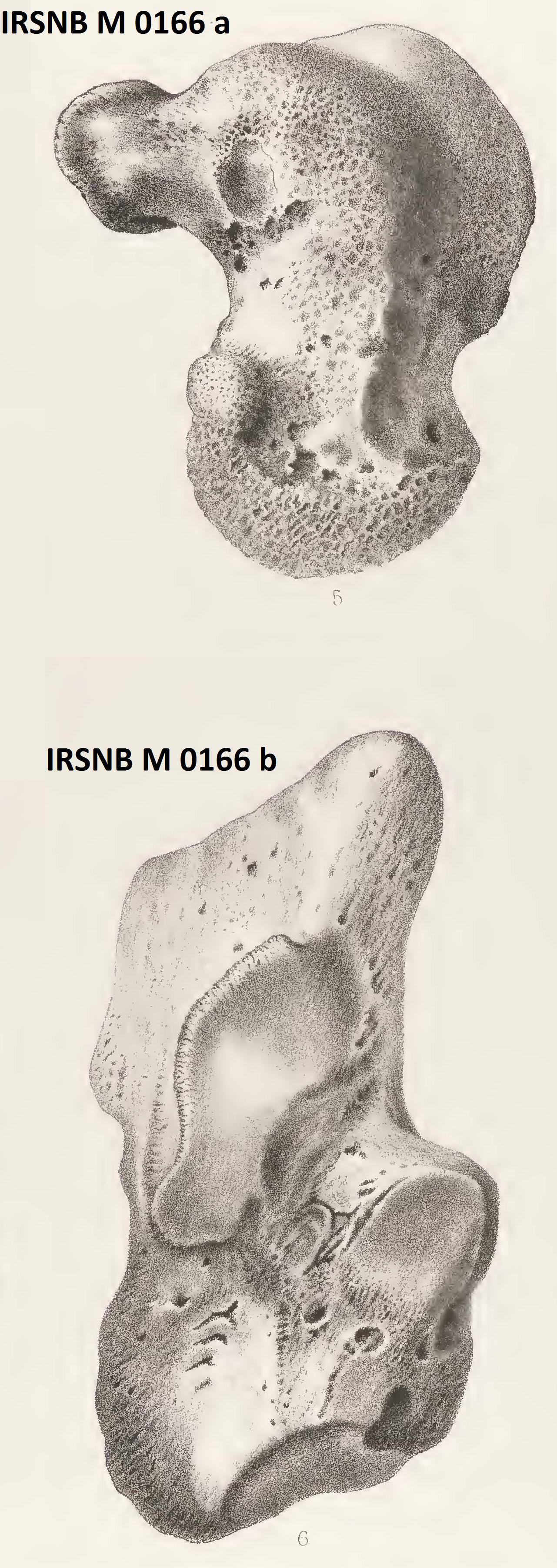 IRSNB M 0166a-b publi