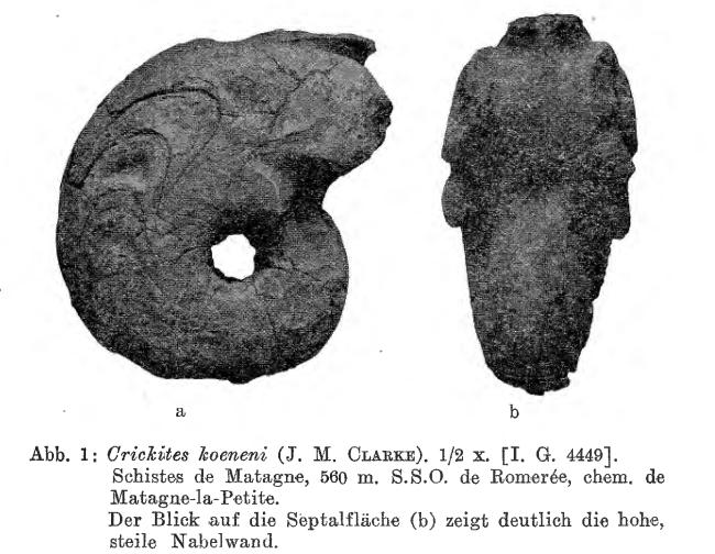 Matern 1931 - Figure 1