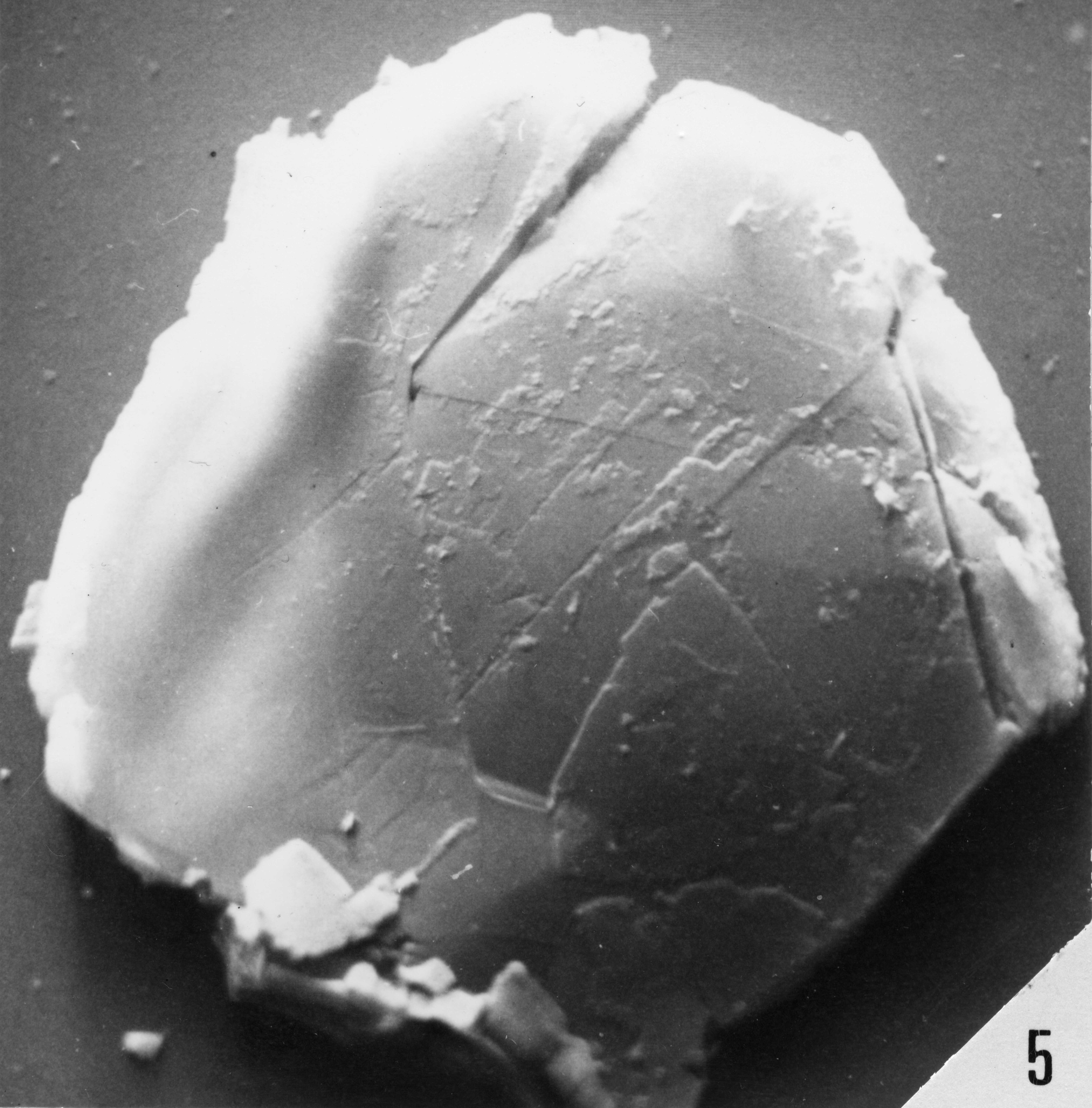 Fig. 5 - Graphite. Mas de Mougno : MOU-1. b 473.