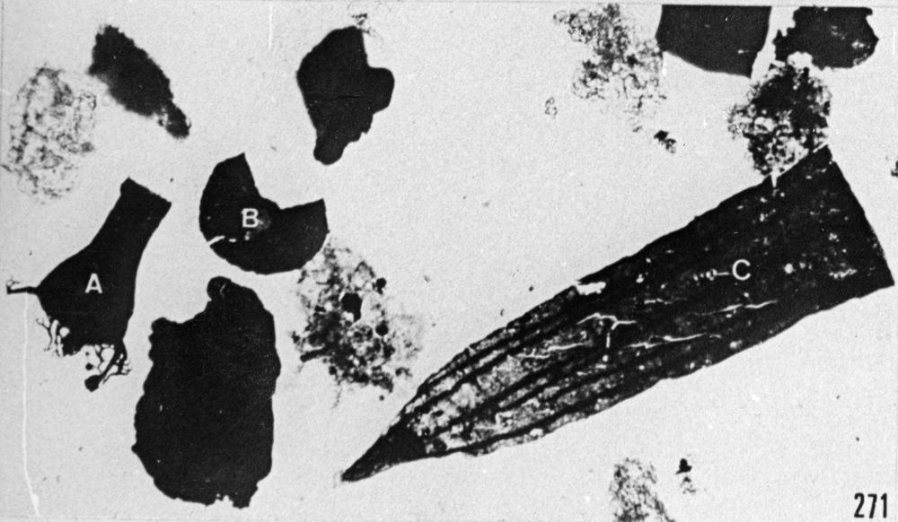 Fig. 271 - Palynofacies; A: Ancyrochitina ancyrea (Eisenack) —167,50 m. b 335.