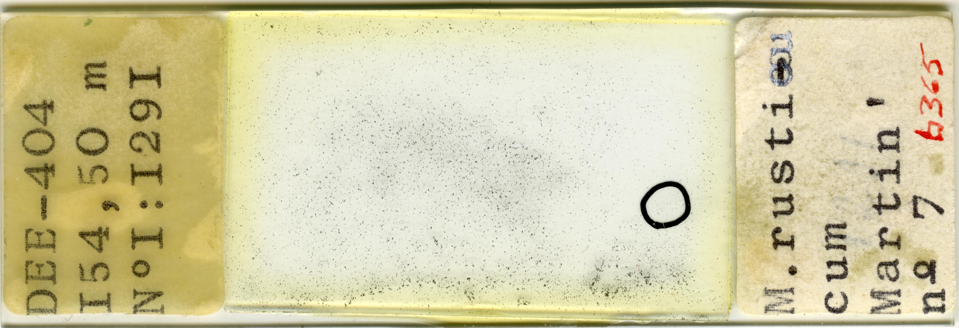 Lame n°DEE-404 I5O, 50 m N° I : I29I - M. rusticum Martin ' n° 7 b 365