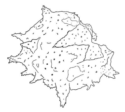 Texte-fig. 7 - Baltisphaeridium ? sanpetrensis (Cramer)