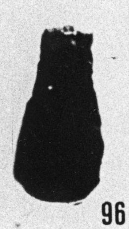 Fig. 96 - Conochitina simplex Eisenack. —175,50 m. b413