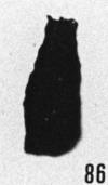 Fig. 86 - Conochitina simplex Eisenack. —175,50 m. b 414.