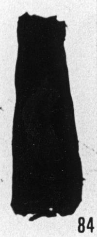 Fig. 84 - Conochitina sp. —175,50 m. b411.