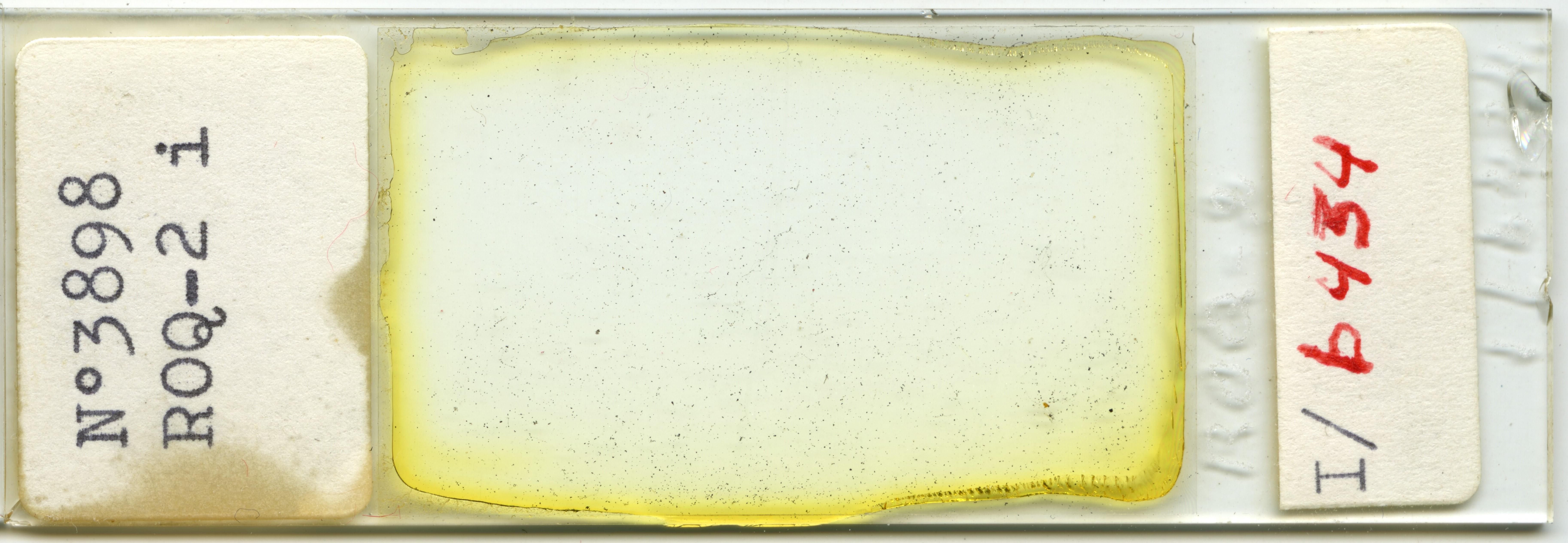 Lame n°3898 ROQ-2 i. I/b 434