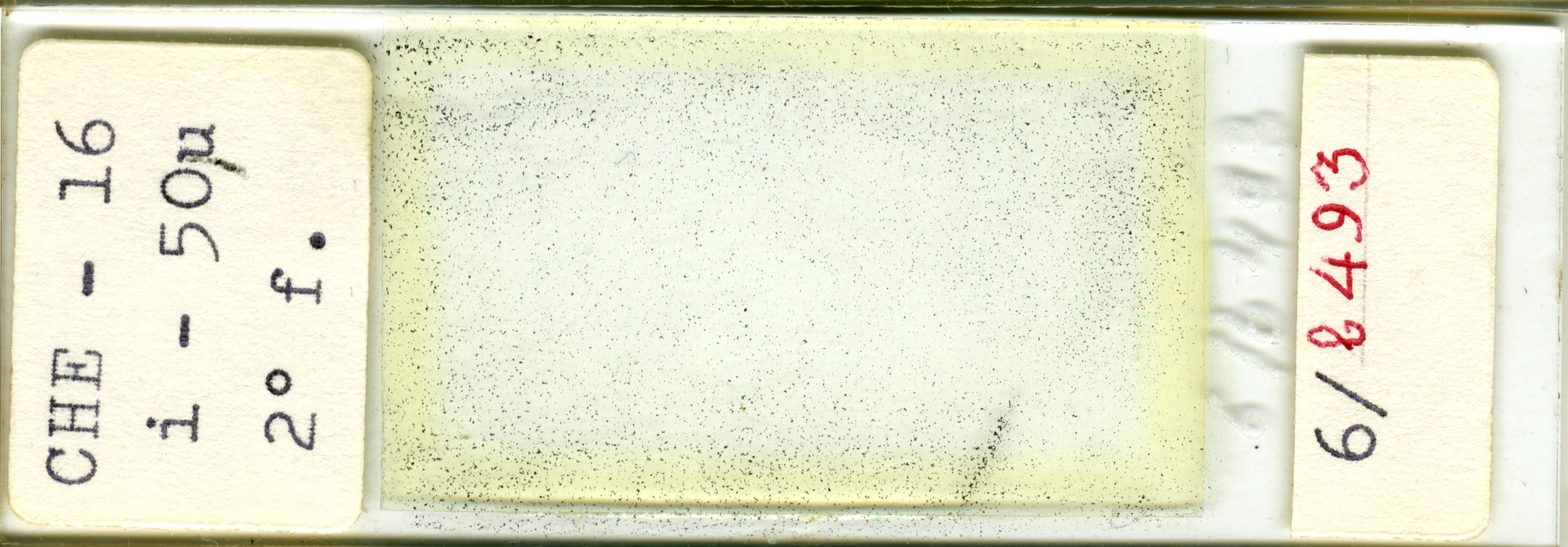 Lame n°CHE - 16 i - 50µ 2°f. 6/b 493