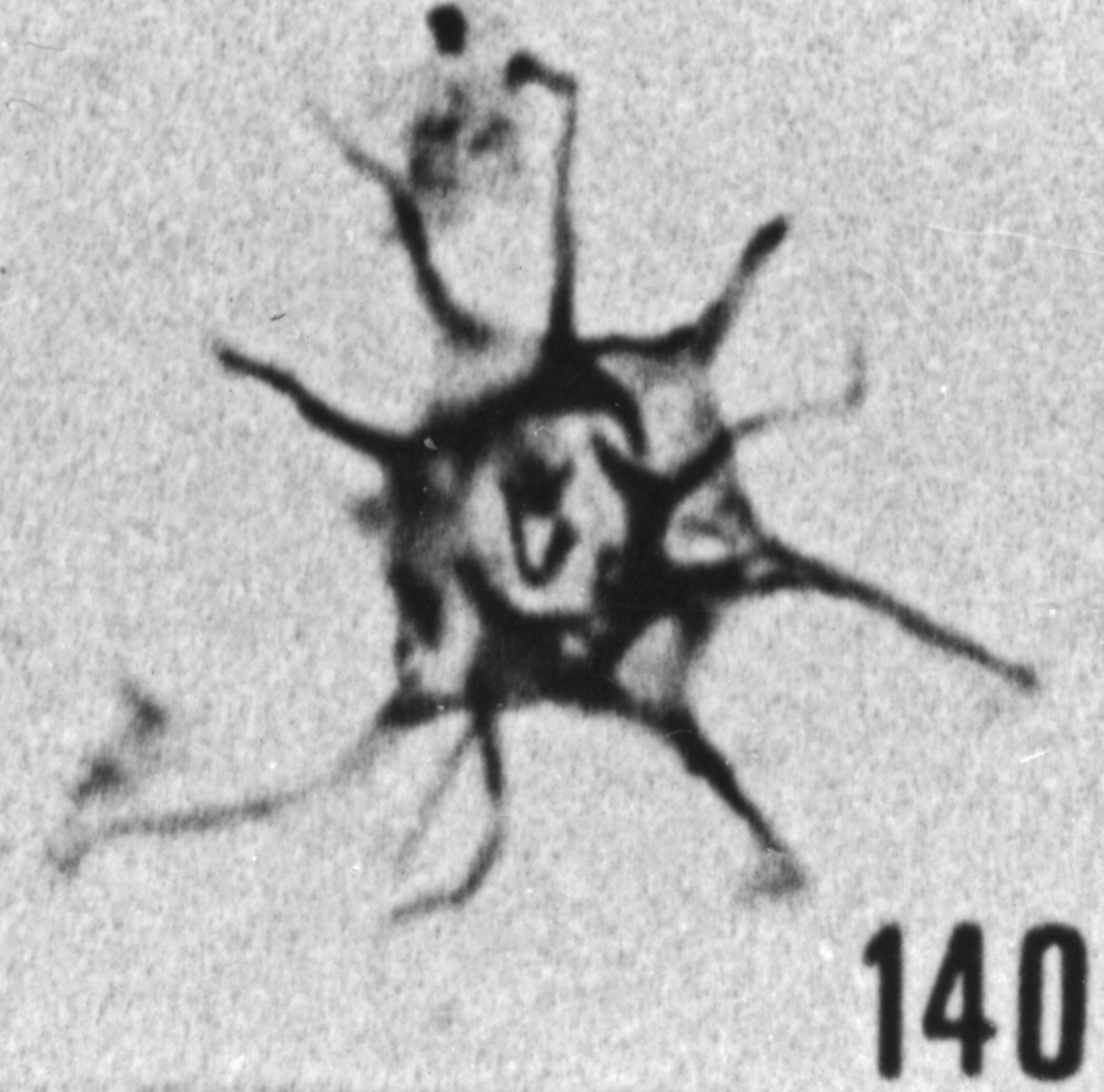 Fig. 140 - Micrhystridium. stellatum Deflandre. 83,00 m, b 386.