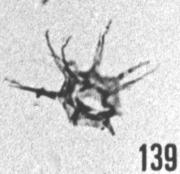 Fig. 139 - Micrhystridium. stellatum Deflandre. -154,50 m, b 363